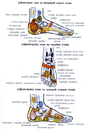 Рефлекторные зоны и области стопы.